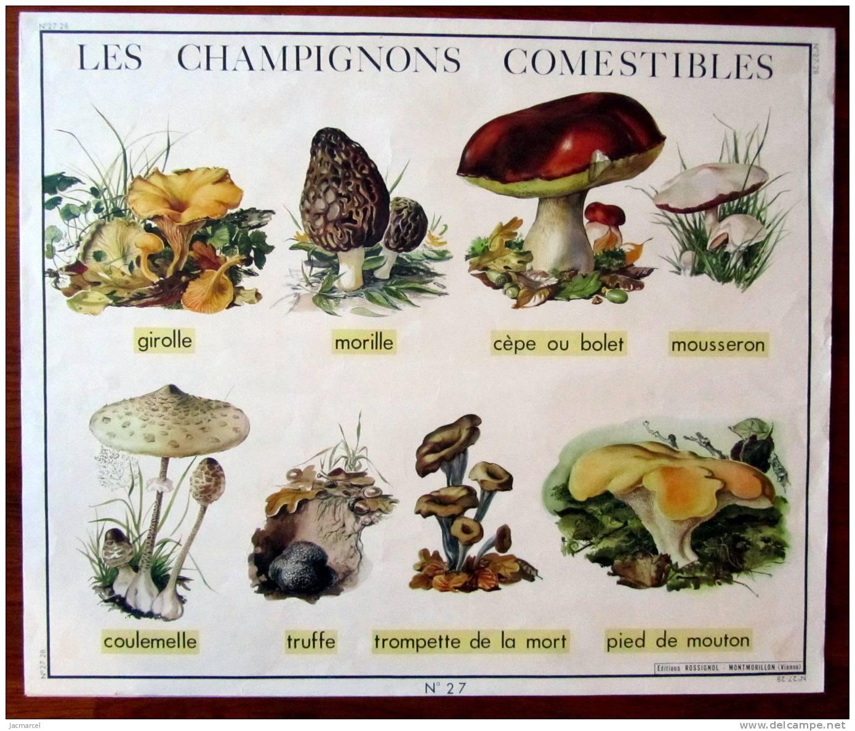 Comment reconna tre les champignons v n neux gothicat world gazette - Comment nettoyer des champignons des bois ...