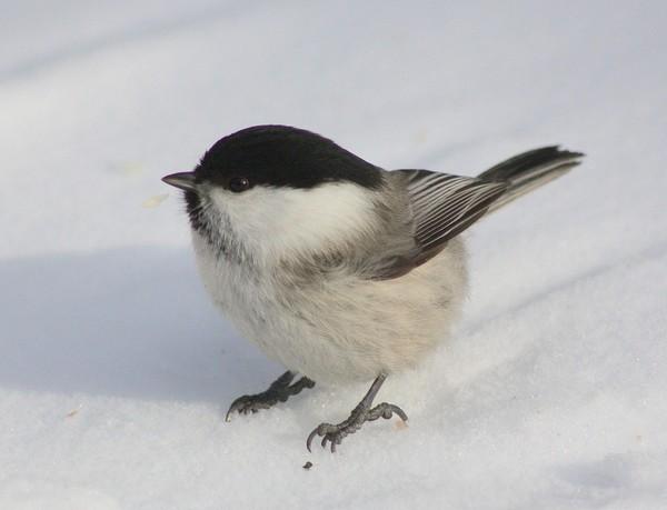 bird-100293_960_720